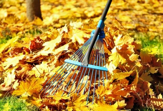 Clearing the Leaves
